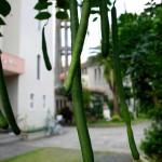奄美探訪07 ©まちいろ