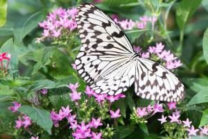 蝶ハウス ©まちいろ