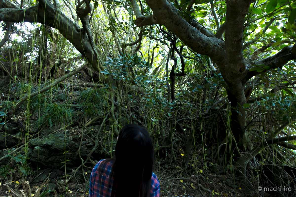 有良厳島神社の杜写真