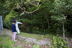 中島川写真