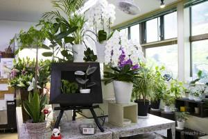 まさみ花工房 観葉植物写真