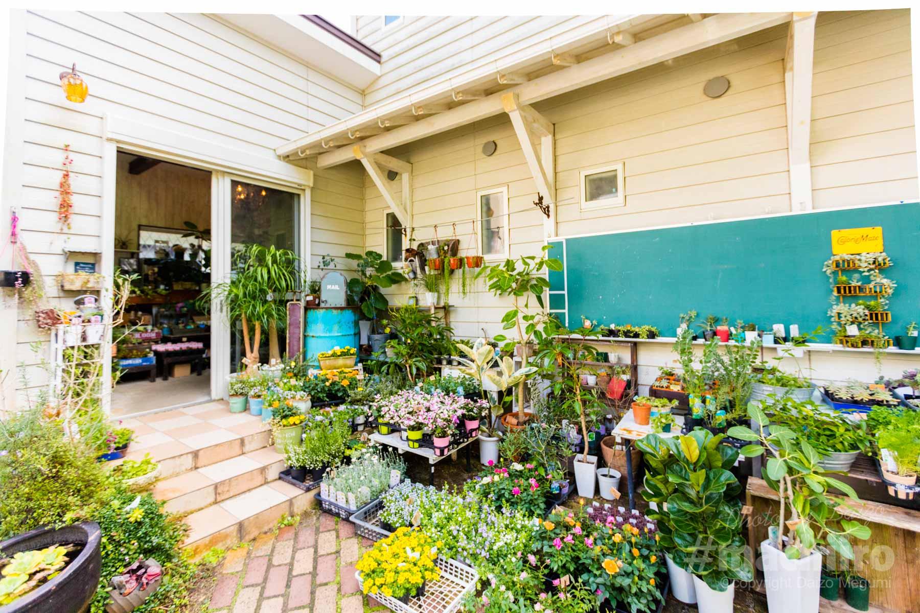 奄美 ウェディング 花舎 写真