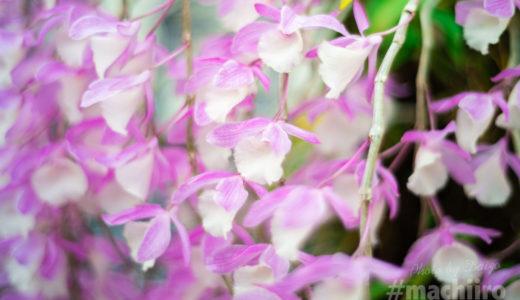 美しく、可憐な花が道ゆく人の目を楽しませています。