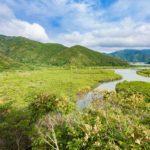 マングローブ原生林 写真