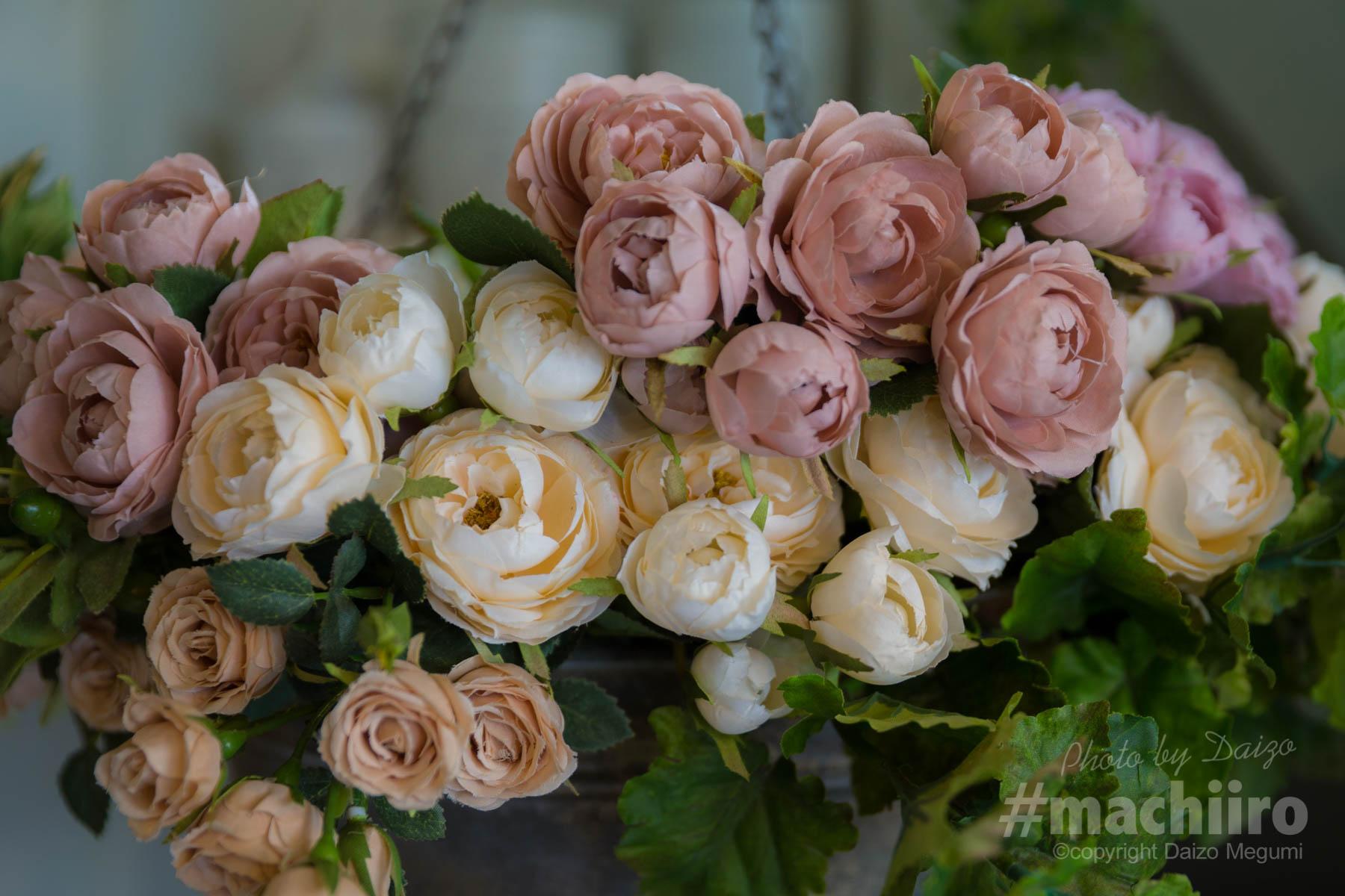 ガーデンガーデンさんで写したバラの写真