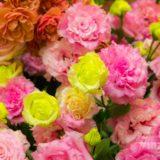 花舎さんで写したバラの写真