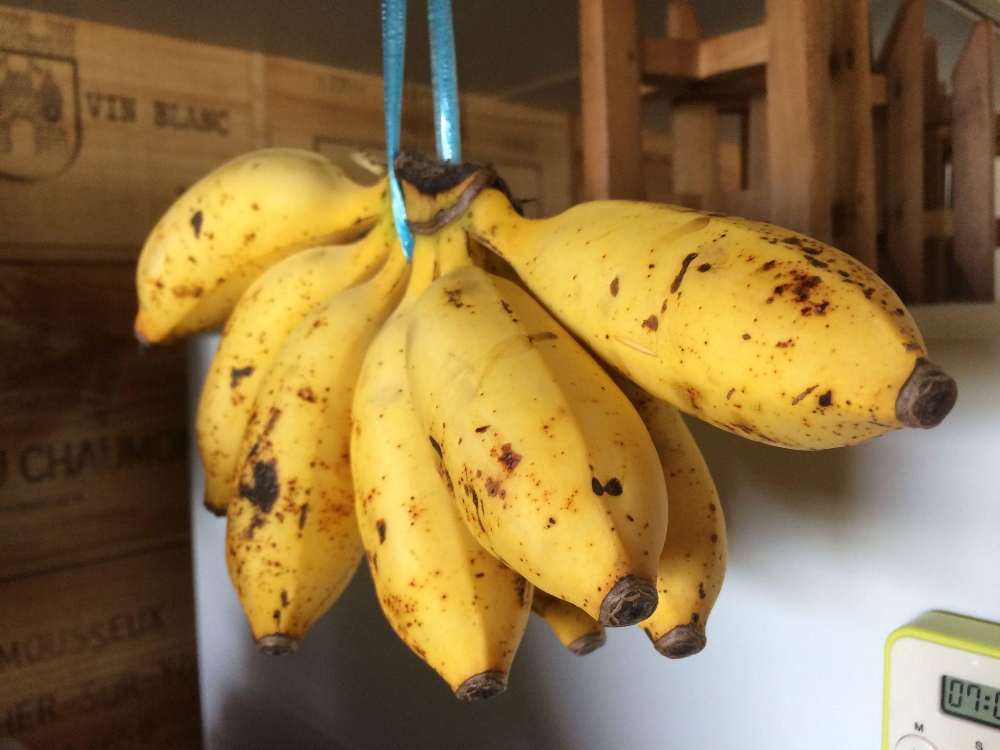 島いろ図鑑 島バナナ写真