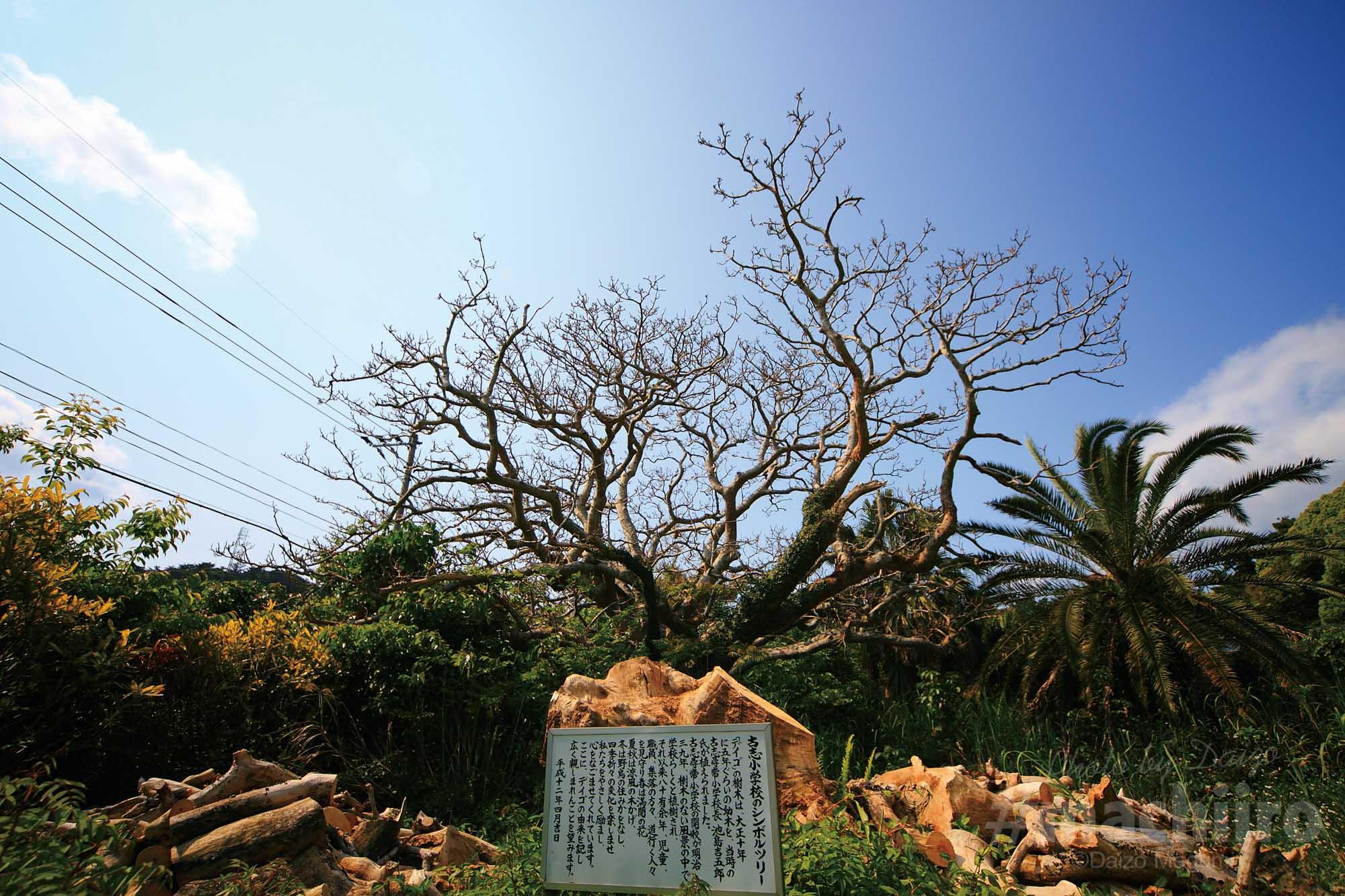 奄美探訪 西古見集落 machiiro 記事写真 1