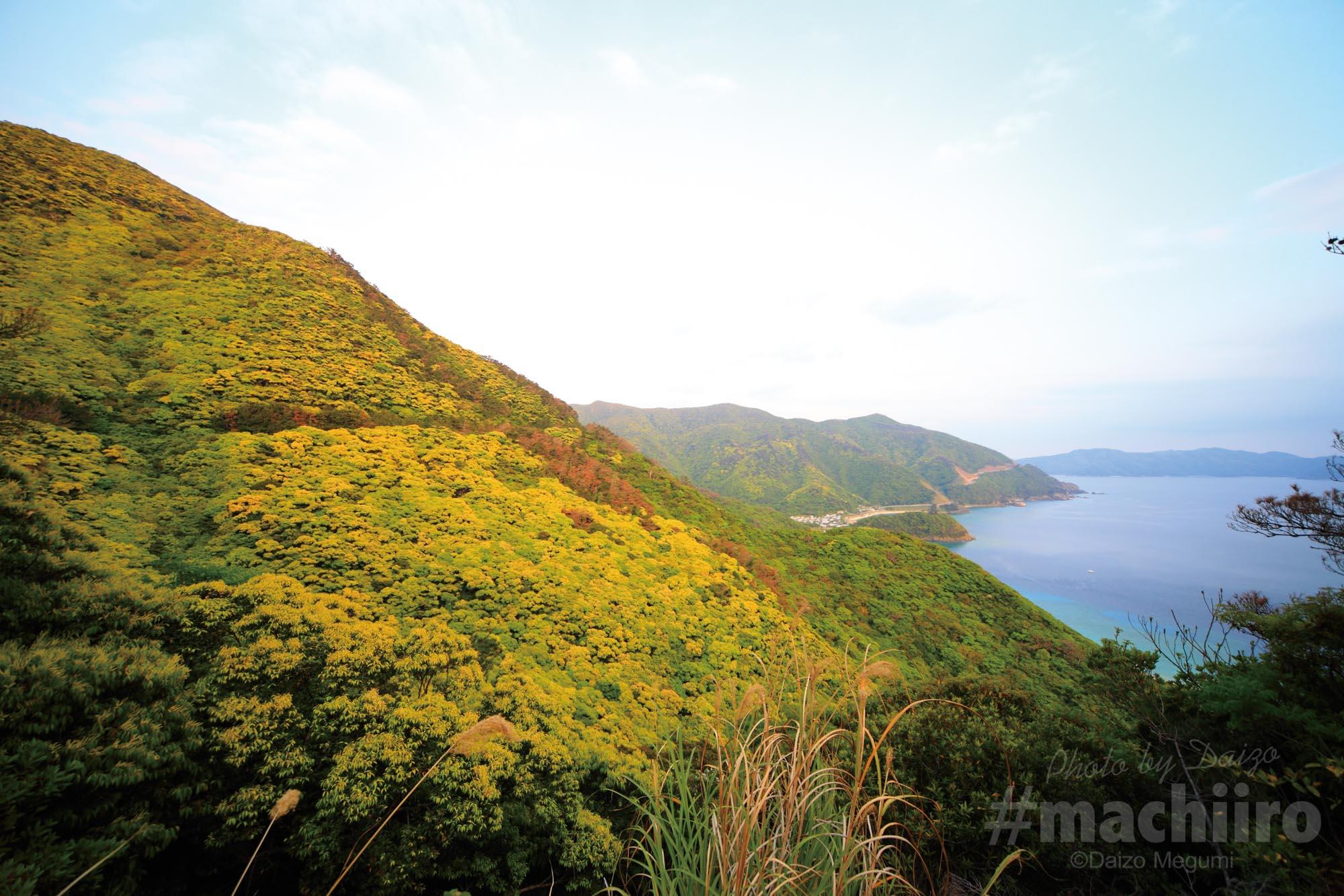 奄美探訪 西古見集落 machiiro 記事写真 13
